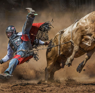 Снимок Mad Cow фотографа  Tony Law, победивший в категории Sports Photographer Of the Year среди Non-Professional конкурса International Photography Awards 2019